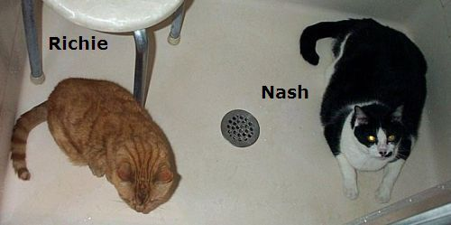 picture of Nash and Richie (Jim's cats)